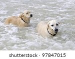 dog playing in the sea - stock photo