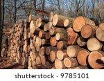 timber | Shutterstock . vector #9785101
