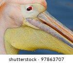 A Close Up Of A Pelican In A...