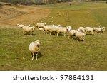 sheep on a farm | Shutterstock . vector #97884131