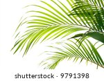 Palm Fronds Waving In The Wind...