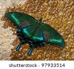 Beautiful Asian Swallowtail...