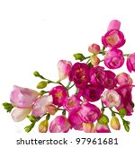 Bloom Of Pink Freesias Flowers