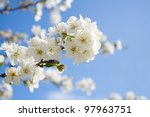 Постер, плакат: Bunches of plum