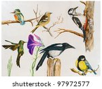 A Collection Of Painted Birds ...