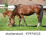 Horse eat - stock photo