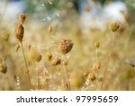 Dry Plant