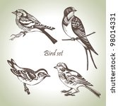 Bird Set  Hand Drawn...