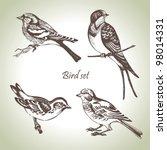 Bird Set  Hand Drawn...