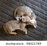Two Cute Kittens Sleeping On...