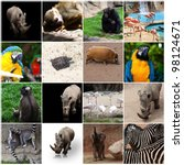 various wild animals composition | Shutterstock . vector #98124671