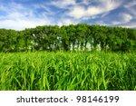 Green field in spring - stock photo