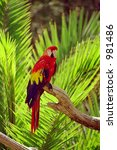 papagei | Shutterstock . vector #981486