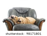 happy lazy dog english bulldog... | Shutterstock . vector #98171801