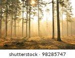 Autumn Dawn In Pine Forest