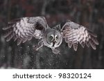 Great Grey Owl Or Lapland Owl...