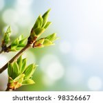 Green Buds On Branches In...