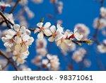 ������, ������: Brunch of apple blossoms