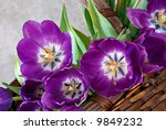 Beautiful purple tulips in a woven basket against a marble background.  Close-up with angled comp and shallow dof. - stock photo