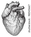 human heart   vintage... | Shutterstock .eps vector #98545667