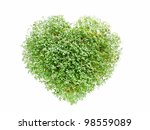 Heart shaped from watercress plant on white - stock photo