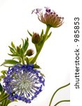 spring growth ... pin cushion... | Shutterstock . vector #985853