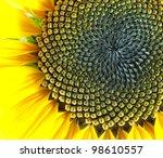 Macro Of Sunflower Detail