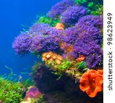 colorful underwater flora | Shutterstock . vector #98623949