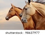 Stock photo purebred horses closeup in sunset small depth of field 98637977