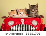 Stock photo moggie kittens inside red toy car on yellow green background 98661701