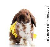 lop eared rabbit with yellow... | Shutterstock . vector #98862704