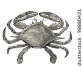 Crab   Vintage Engraved...