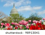 Stock photo tulips in front of the capitol building in spring washington dc 98913041