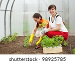 Two women planting tomato seedling in hothouse - stock photo