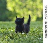 Black Kitten Outdoors In The...