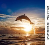 Beautiful Dolphin Leaping...