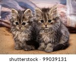 Stock photo two cats sitting on the bed 99039131