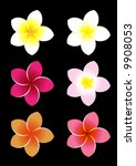 colorful frangipani flowers. | Shutterstock .eps vector #9908053