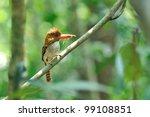 bird  banded kingfisher   ... | Shutterstock . vector #99108851