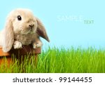 baby easter bunny on spring... | Shutterstock . vector #99144455