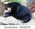 Malayan Sun Bear Is Playing On...