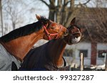 two bay horses playing with... | Shutterstock . vector #99327287