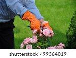 Stock photo gardening 99364019