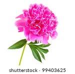 pink peony | Shutterstock . vector #99403625