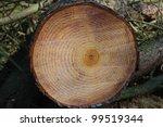cut log | Shutterstock . vector #99519344