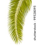 Palm leaf isolated on white - stock photo