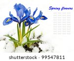 Spring Flowers  Irises On A...