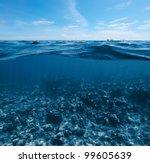 Underwater Shoot Of  Coral Ree...