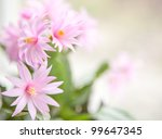 Cactus Flower Background