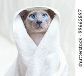 Stock photo funny hairless oriental cat in towel peterbald 99662897